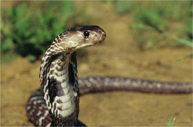 Photo of Vaera. Les messages du bâton changé en serpent