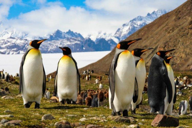 Photo of Infos science : Les pingouins tout comme les êtres humains aiment être hébergés par leurs parents.