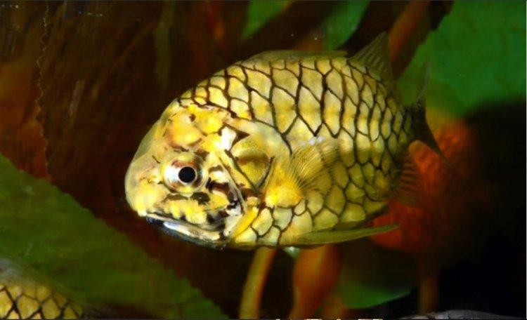 Photo of Merveille dans le golfe d'Eilat : des plongeurs ont découvert un poisson extrêmement rare !