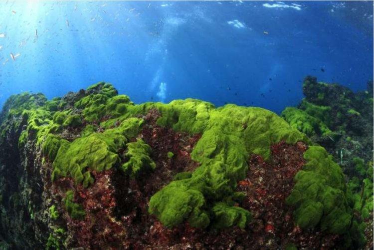 Photo of A la découverte des algues…
