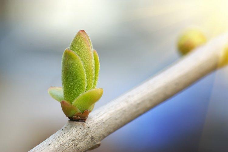 Photo of D'une graine à une fleur, d'un os à un homme…