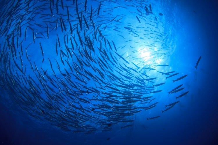 Photo of ''Qui a créé les océans et les mers…''