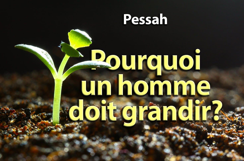 Photo of Pessah – Pourquoi un homme doit grandir?